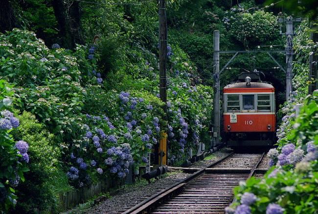 19980718箱根登山大平台03pic.JPG